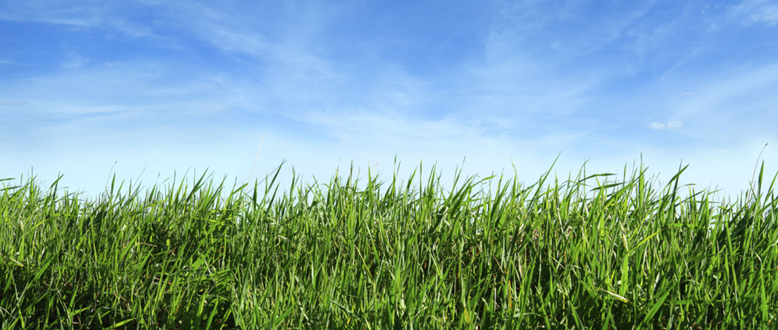 Grassy field with blue sky